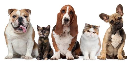 Animais em condomínio